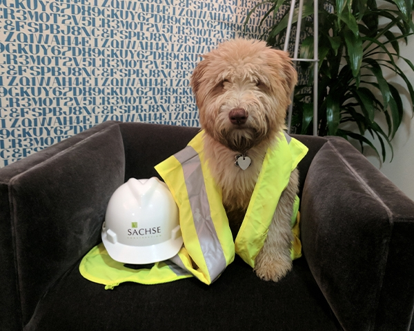 dog at sachse construction